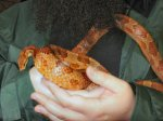 Comfy nest? The snake went a beard too far!
