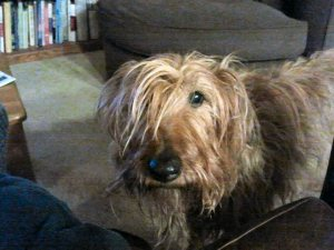 Ruby EMO dog